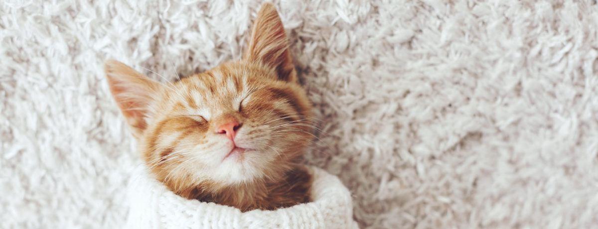 Kotek w lecznicy
